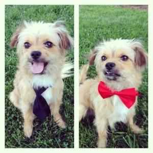 My Pet Dog Raja