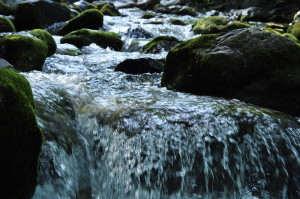 Divine Process of Preparation: Trust, Surrender, and Go with the Flow